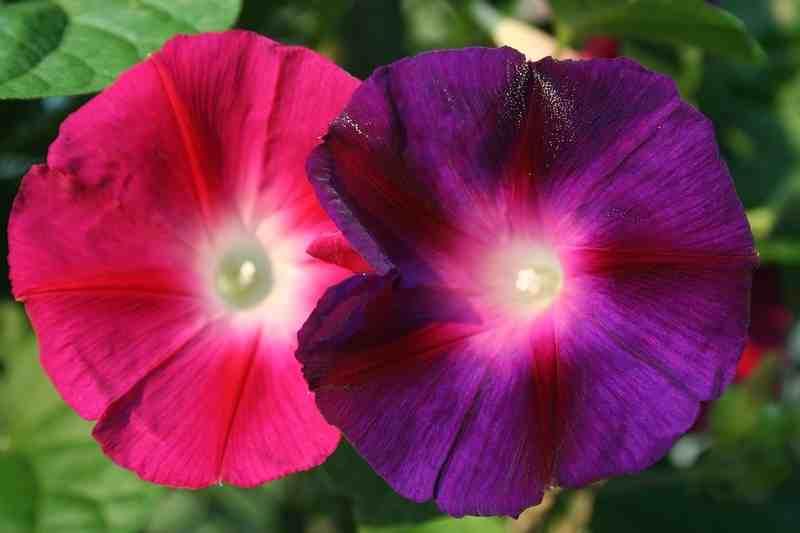 cvijet3 (800x533)